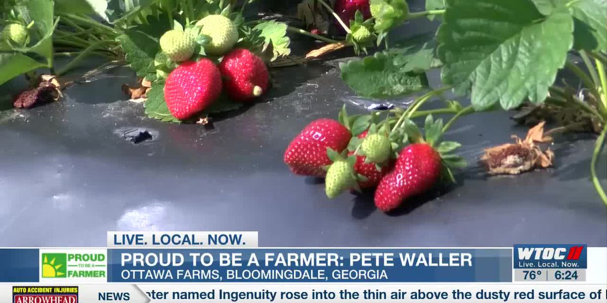 One family has grown delicious strawberries for over a century