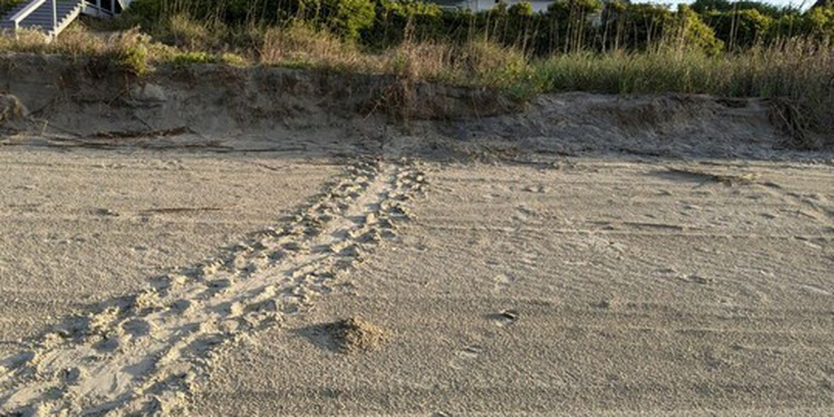 SC reports first sea turtle nest of 2021