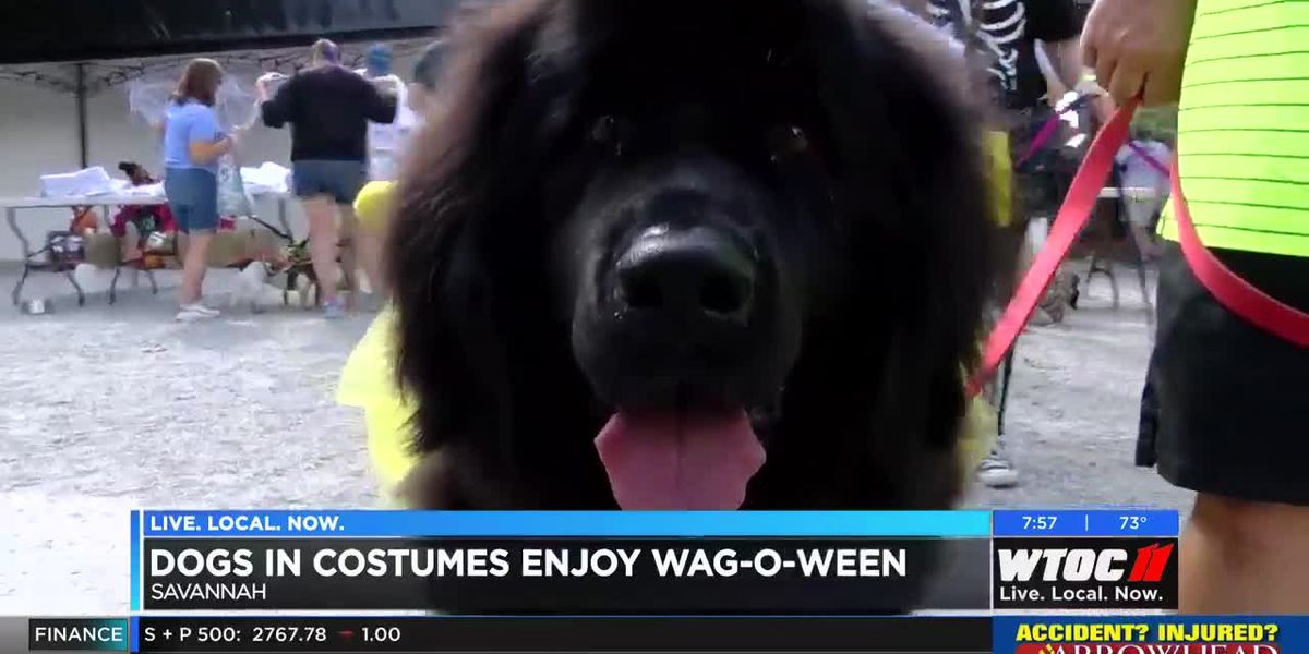SLIDESHOW: Dogs in costumes love Wag-o-Ween