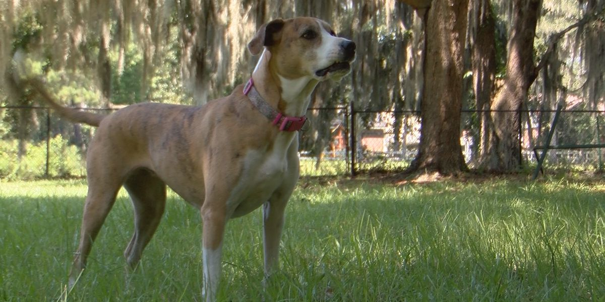 Pet adoption disputes, scams on the rise during the pandemic