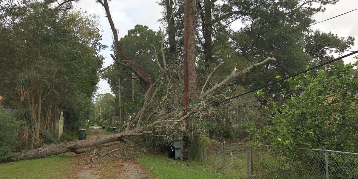 SLIDESHOW: Michael knocks out power, downs trees Wednesday night