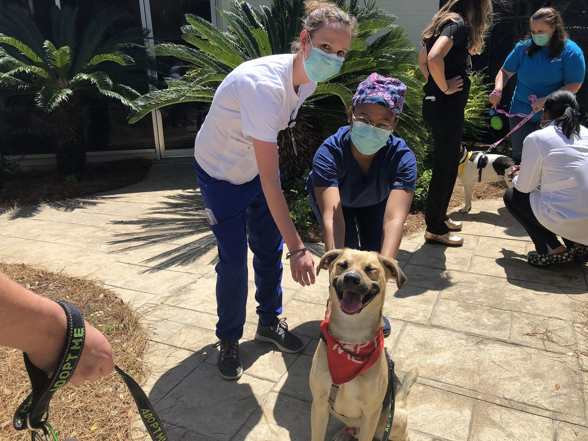 Puppies, kittens bring smiles to nurses during appreciation week