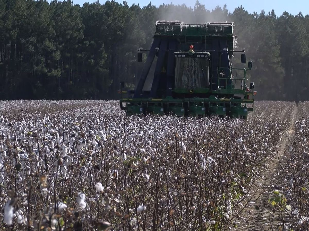 Bulloch Co. farmer reflects on challenging year during harvest