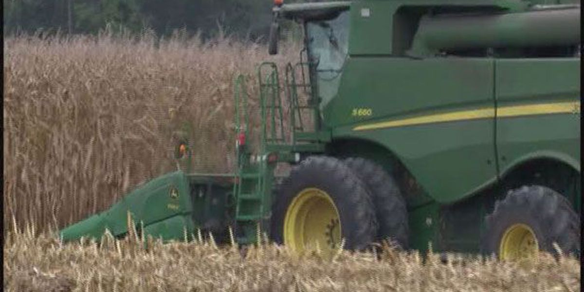Hot weather affecting crops in Bulloch Co.