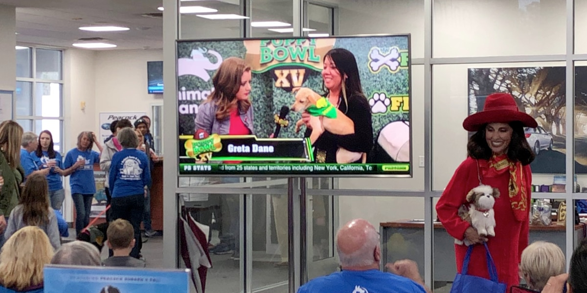 Peacock Subaru, Palmetto Animal League featured in Animal Planet's Puppy Bowl XV