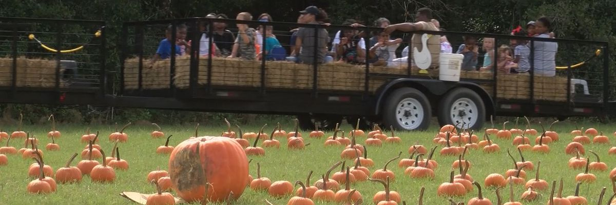 No fall fun at Poppell Farms in 2020 due to COVID-19