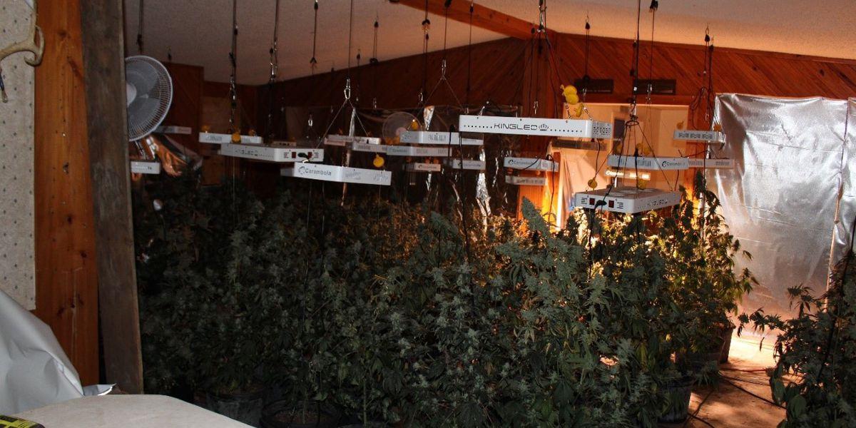 GBI: Schley Co. indoor marijuana operation broken up