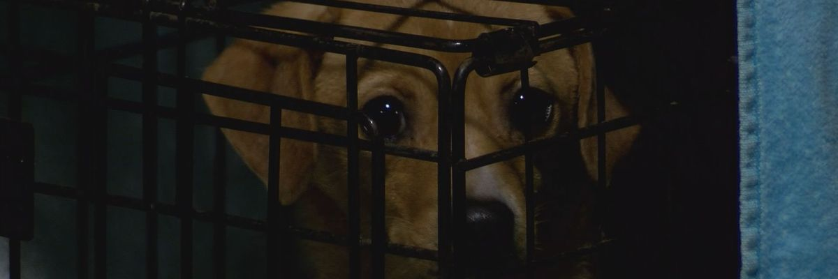Hardeeville rescue gives update on 25 dogs saved from hoarding situation