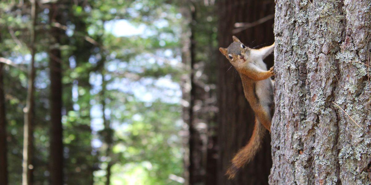 Squirrel hunting season opening August 15 across Georgia