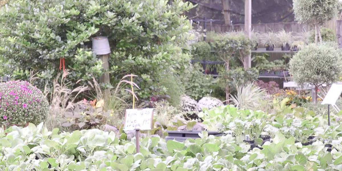 RAW INTERVIEW: Gardening tips during a drought