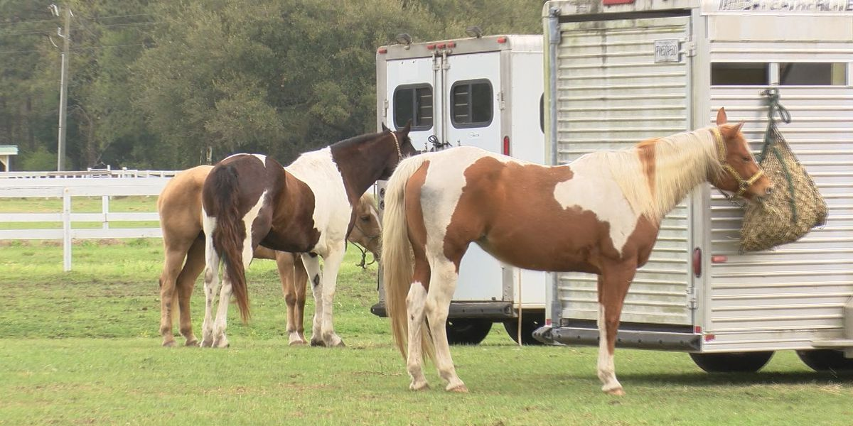 Seminar on Johns Island provides search and rescue training using horses