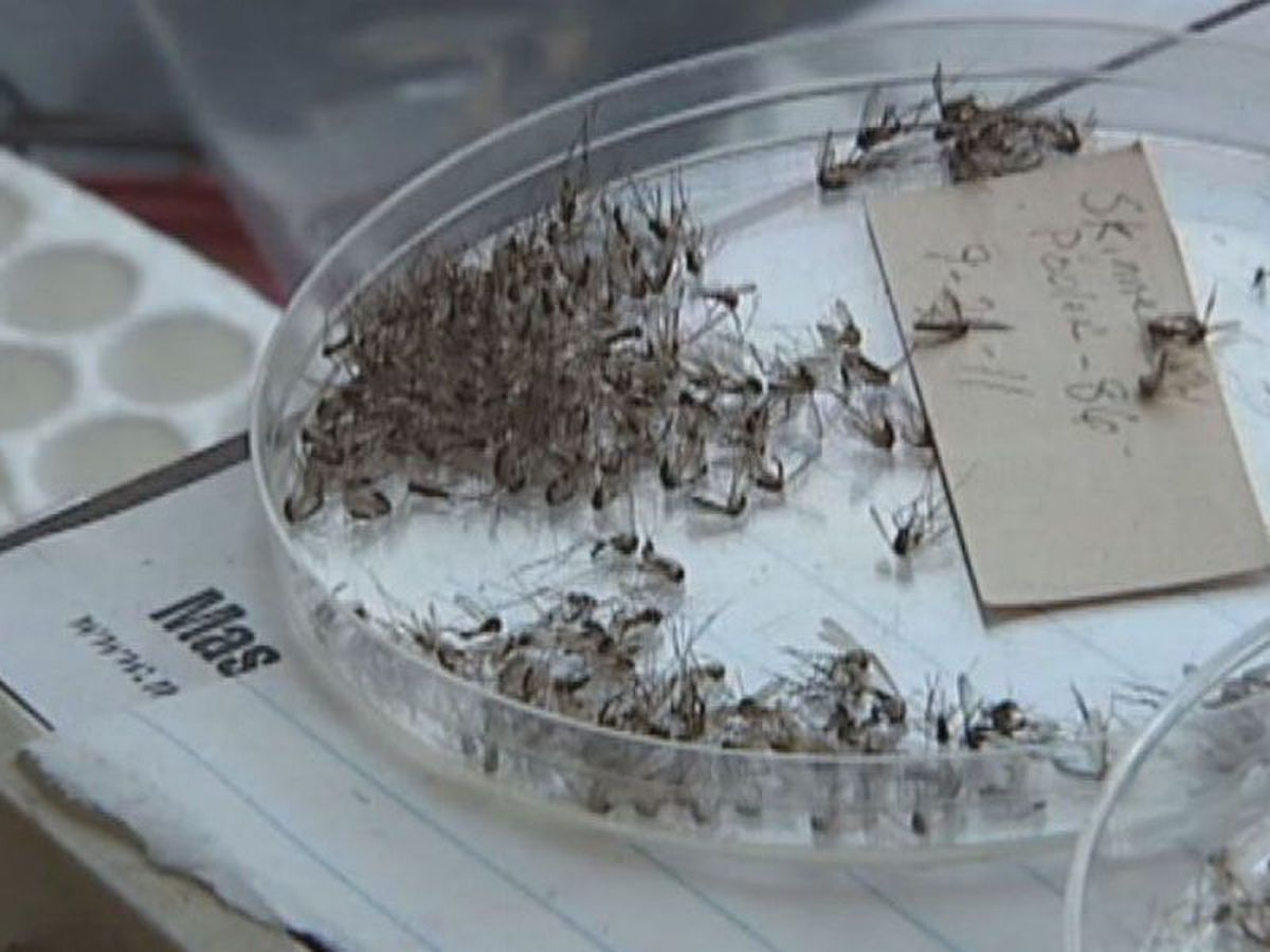 Chatham Co. West Nile virus activity continues to surge
