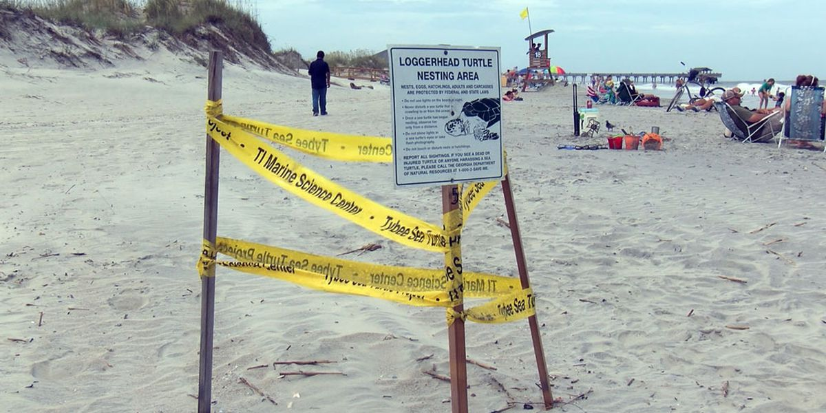 Keeping a clean beach important for turtle nesting season