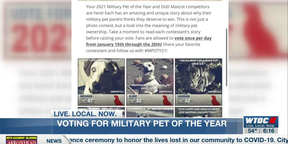 Local dog needs votes to become Military Dog of the Year