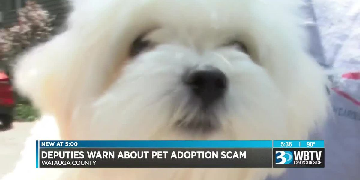 Warning issued for online scams involving pet adoptions