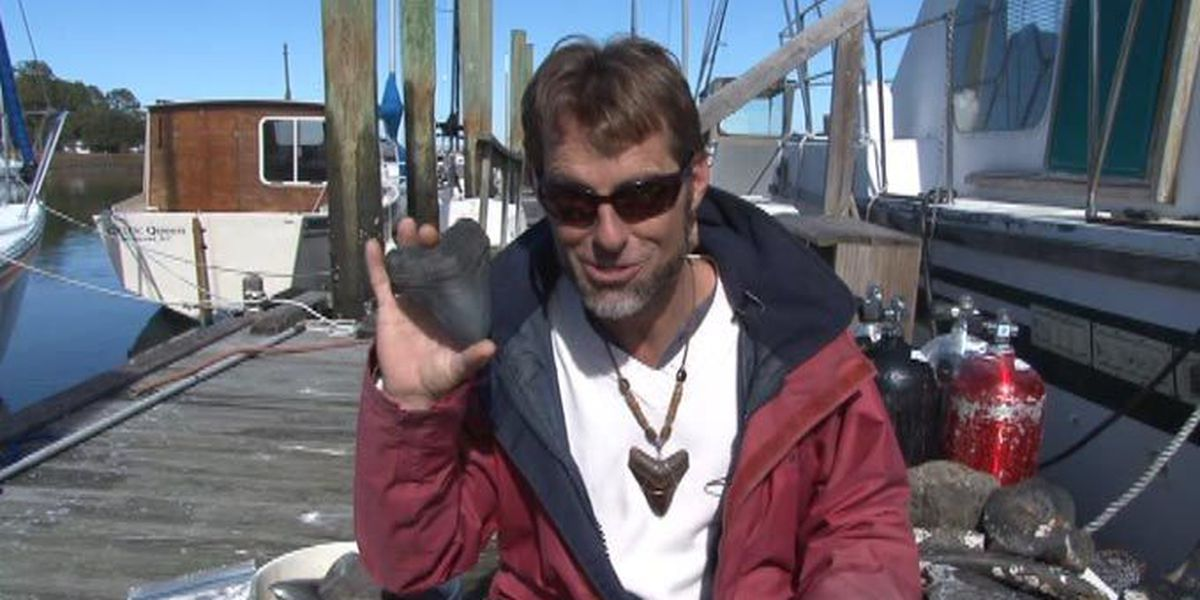 Man who dives for shark teeth to hold treasure hunt