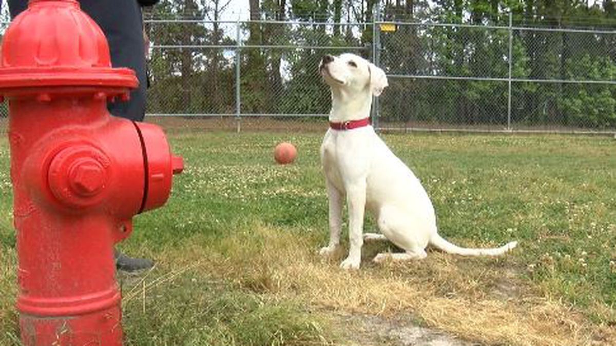 Deaf puppy eying bright future
