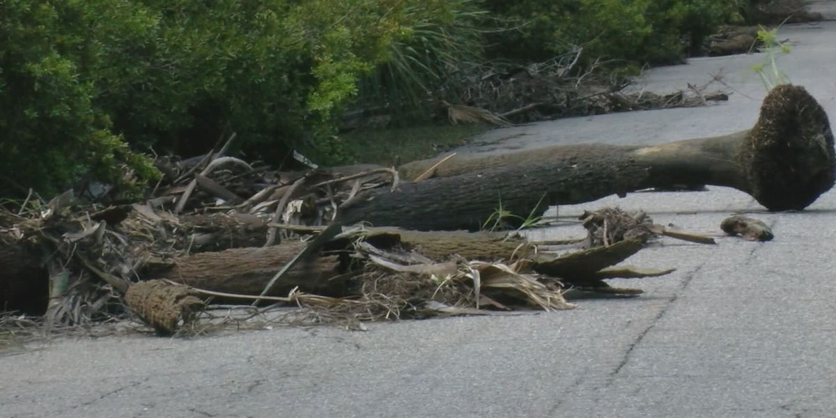 Portion of Hunting Island State Park to reopen sooner than expected