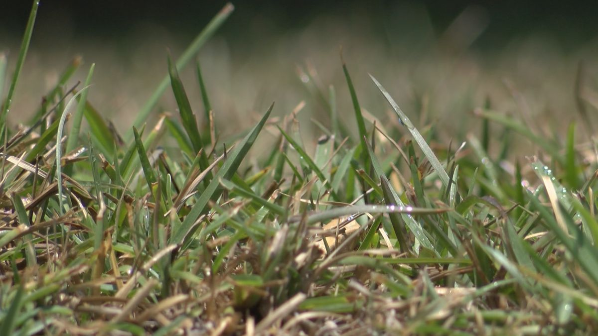 Heat, dry conditions roasting lawns across the region
