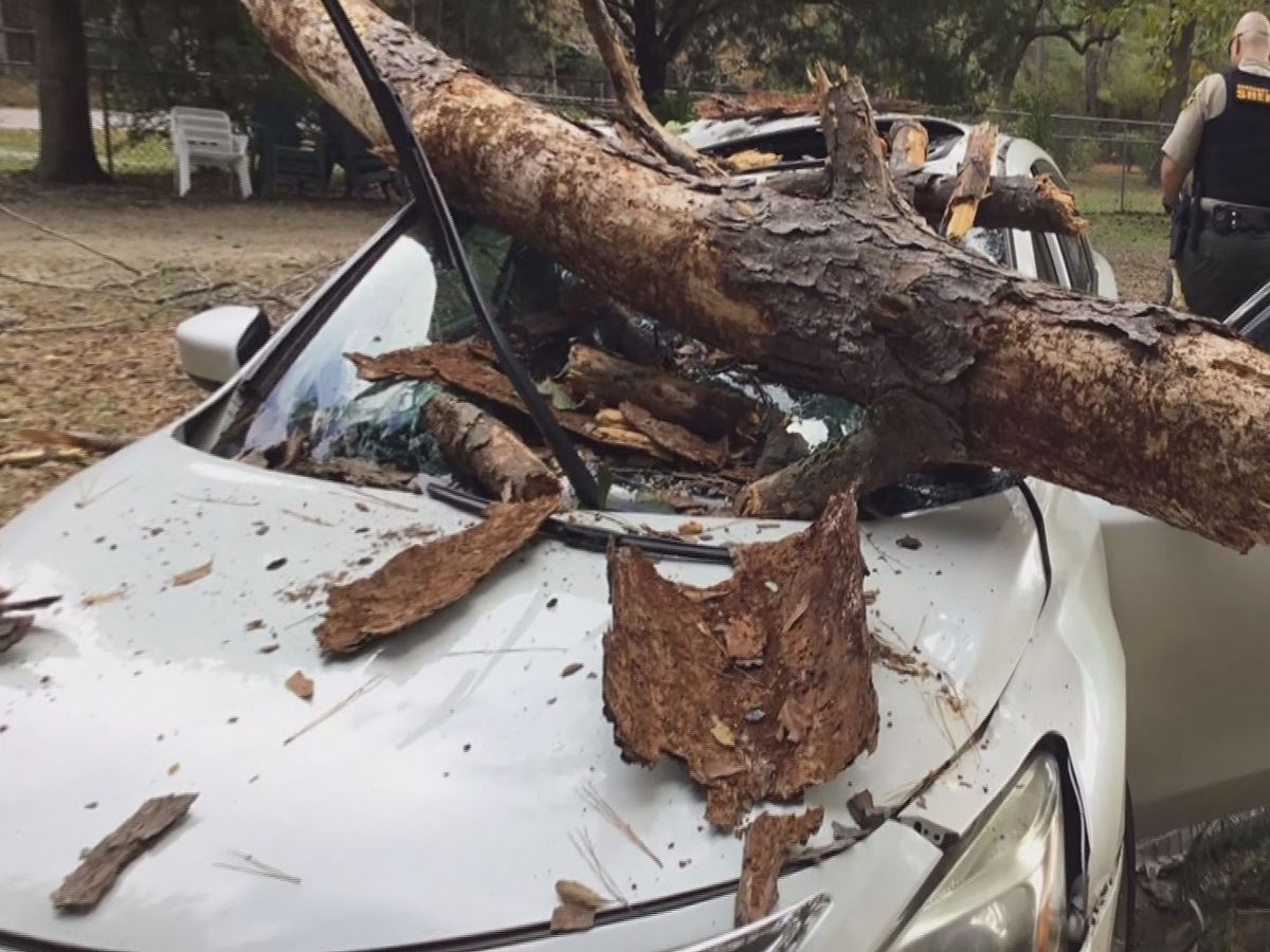Tree limb falls on car injuring woman in Beaufort Co.