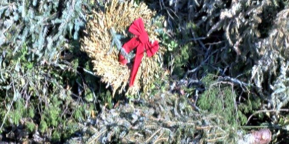 Christmas tree recycling underway in Beaufort County