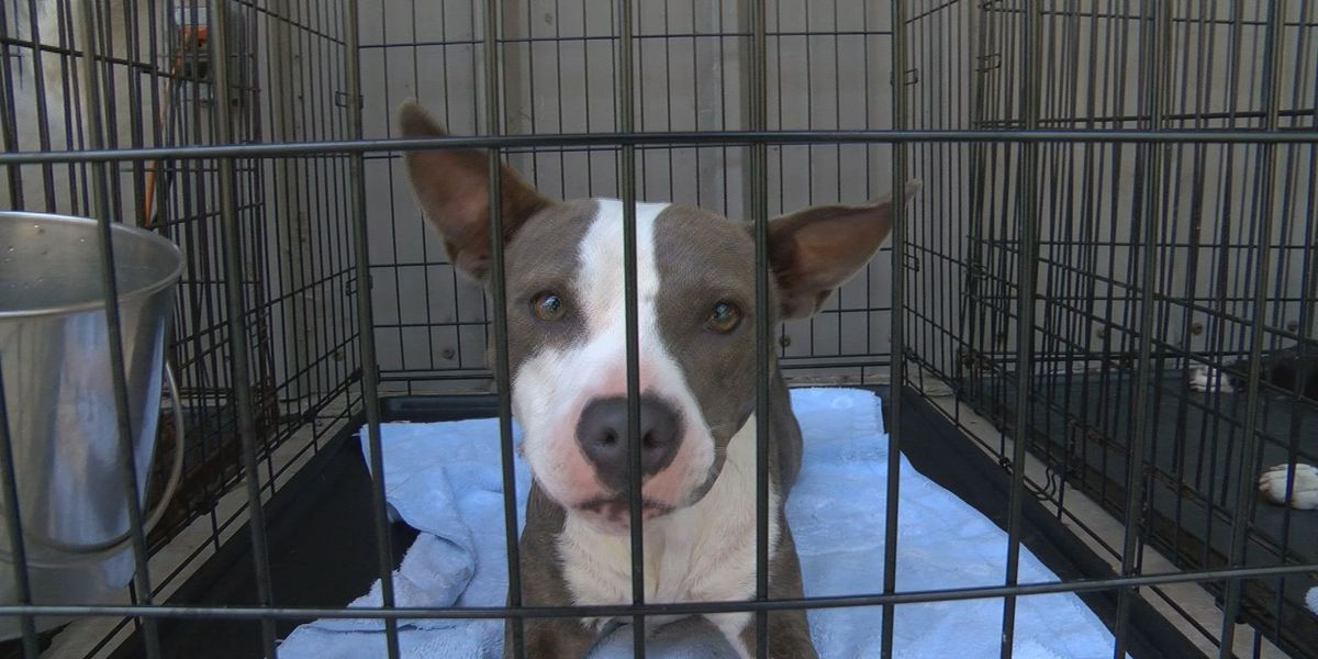 Jasper County Animal Rescue Mission still at more than double capacity