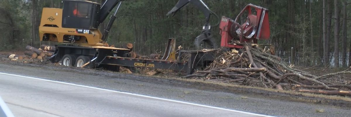 Crews clearing trees near I-16 for safety reasons