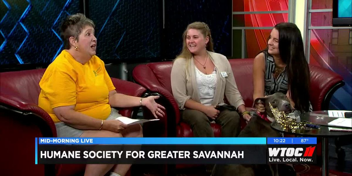 Proceeds from the Tybee Prom benefit the Humane Society of Greater Savannah