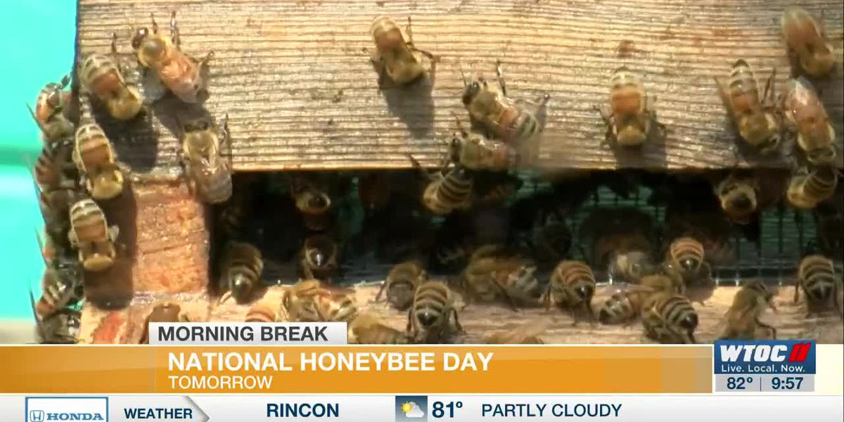 Celebrate National Honey Bee Day at a local business
