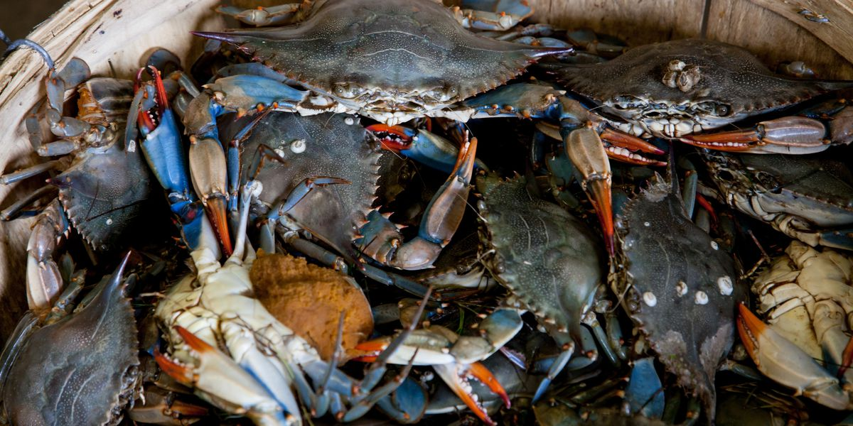 Va. seafood company confesses to selling foreign crab meat falsely labeled as American blue crab