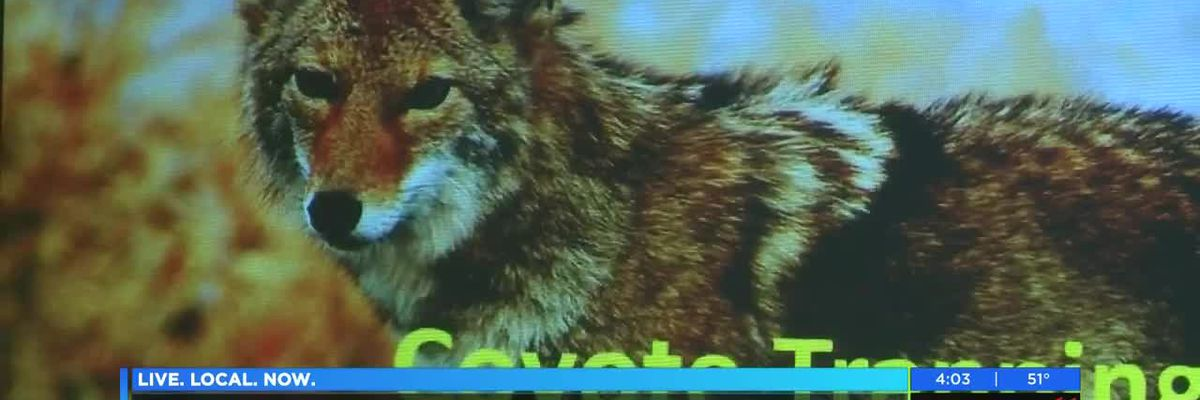 Coyote concerns in the Lowcountry