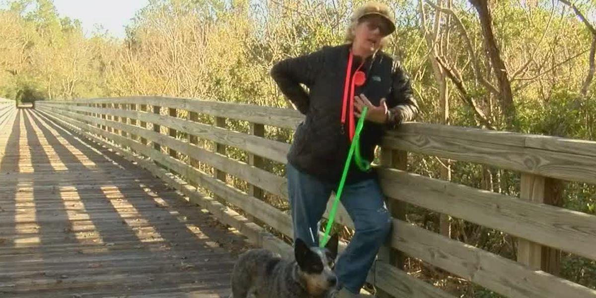 Local dogs win popular magazine's photo contest