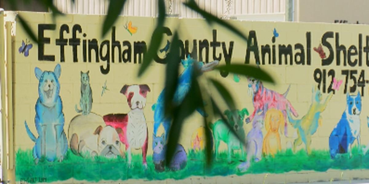Animal shelter finding new ways to serve community