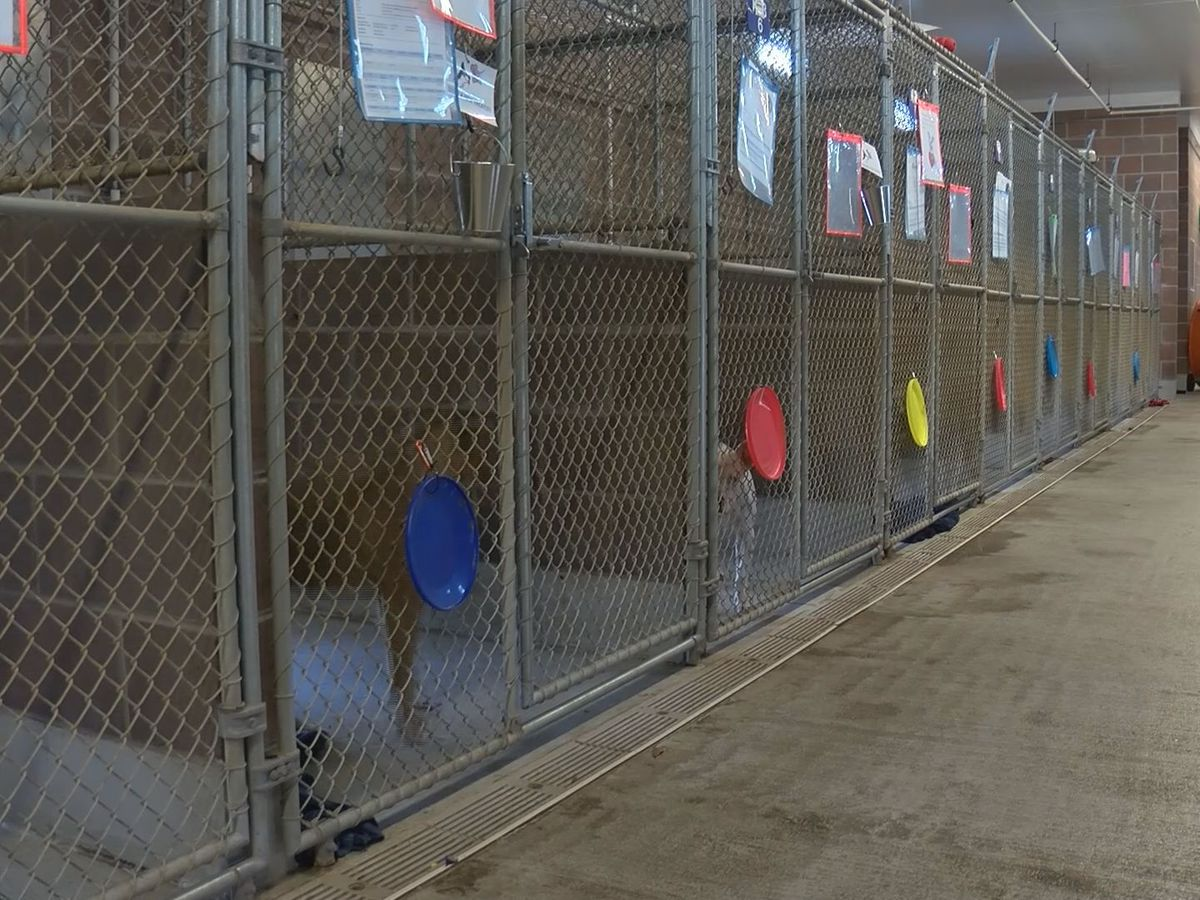 Chatham Co. Animal Services waiving adoption fees
