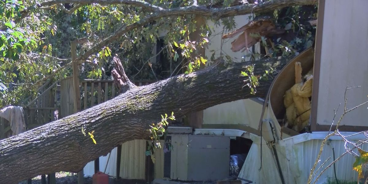 Woman watches trees fall on Bulloch County home