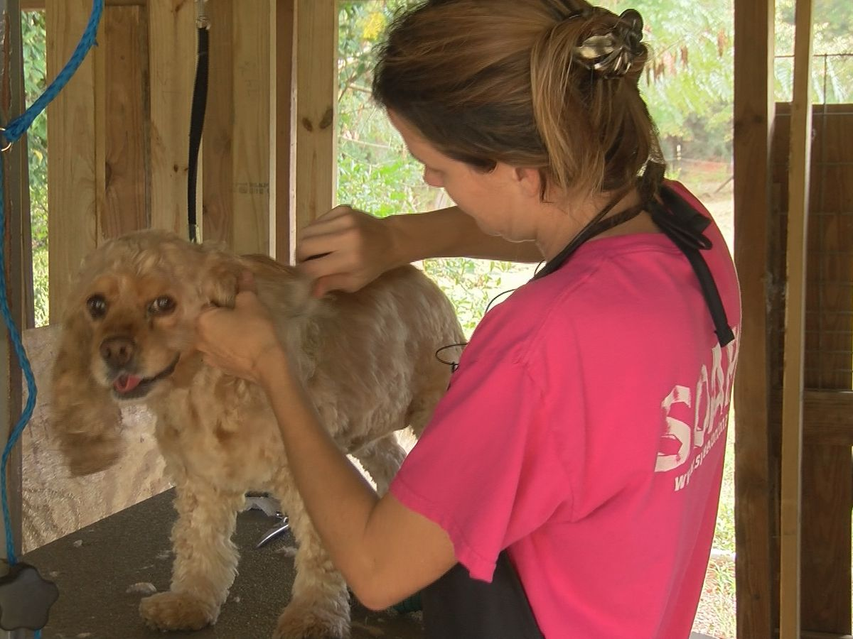 Toombs County kennel starts rebuilding after lightning strike burned it to the ground