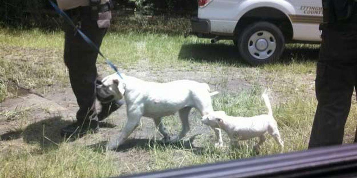 'Bait' dog owner arrested
