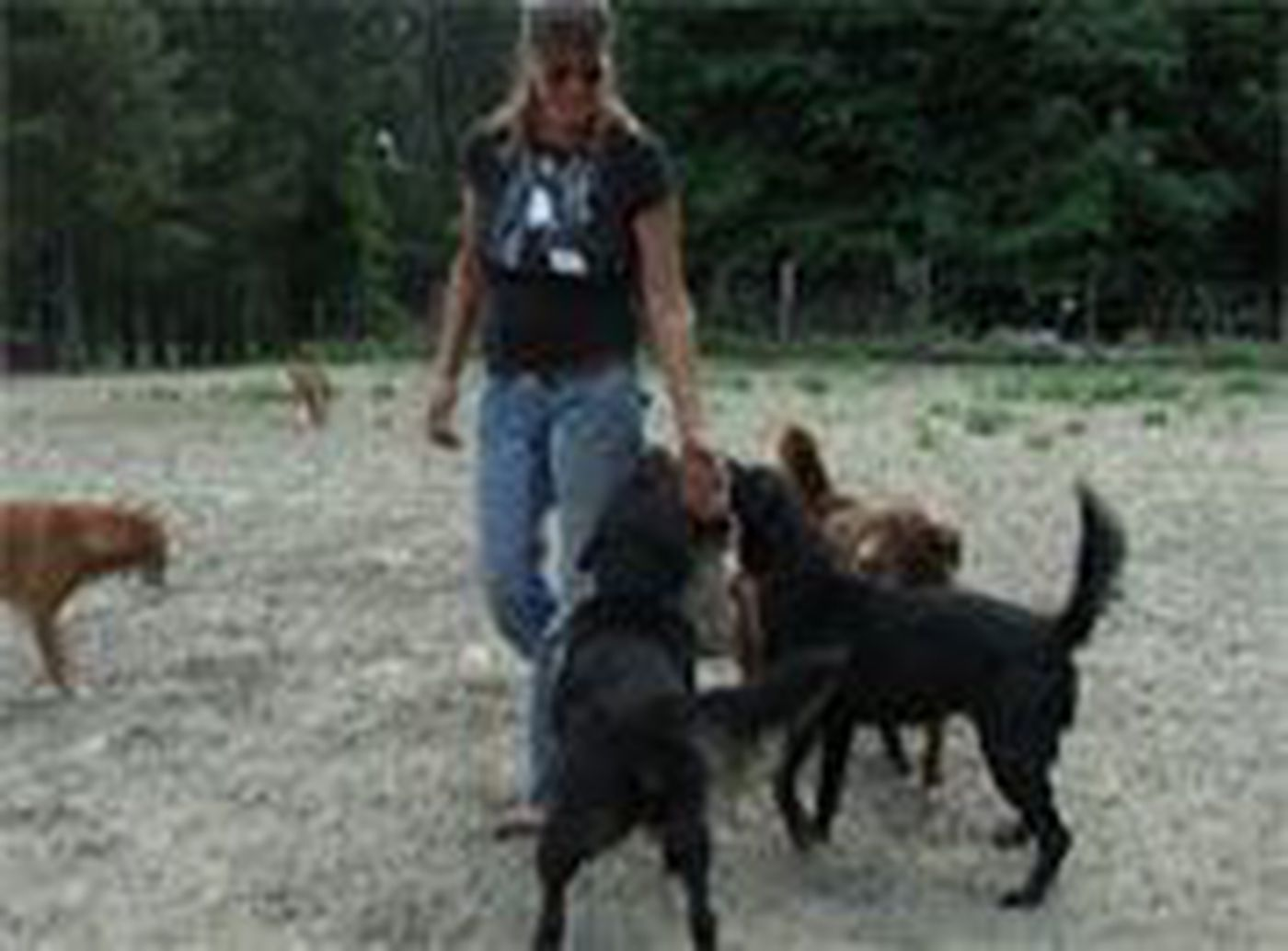 Woman Could Lose Her No Kill Animal Shelter