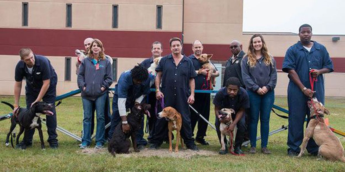 Jail adoption event for Operation New Hope dogs