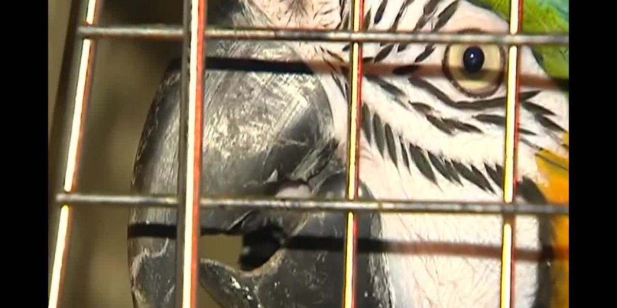 About 100 exotic animals found in PA home