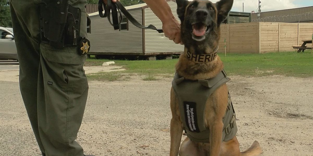 Chatham Co. Sheriff's Office K-9's receive donated bullet-proof vests