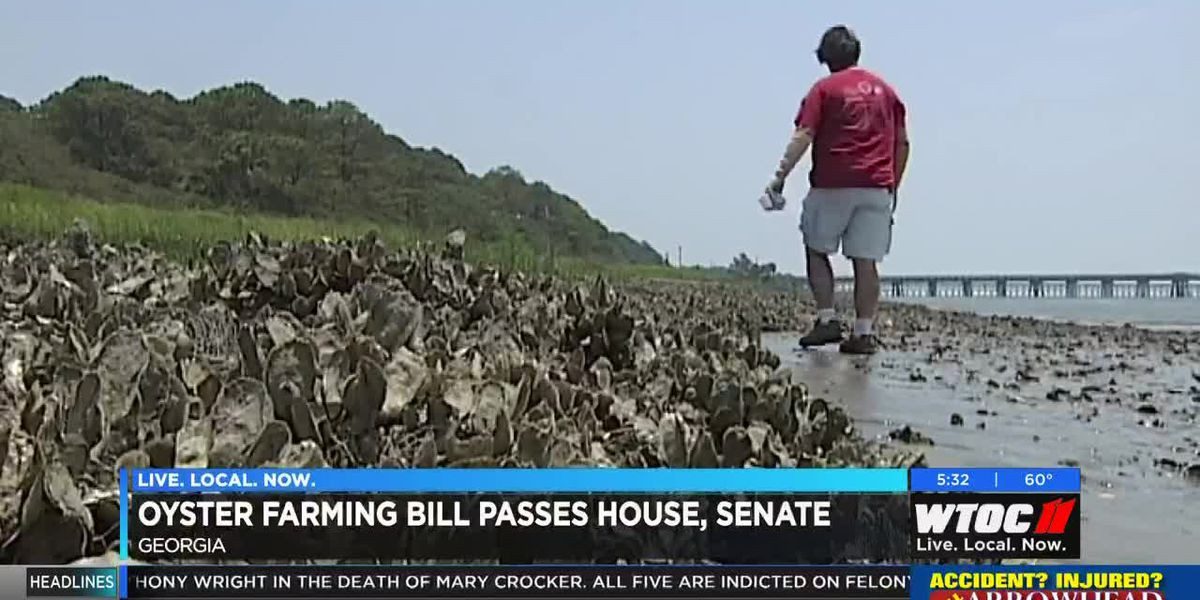 Oyster farming bill passes House, Senate