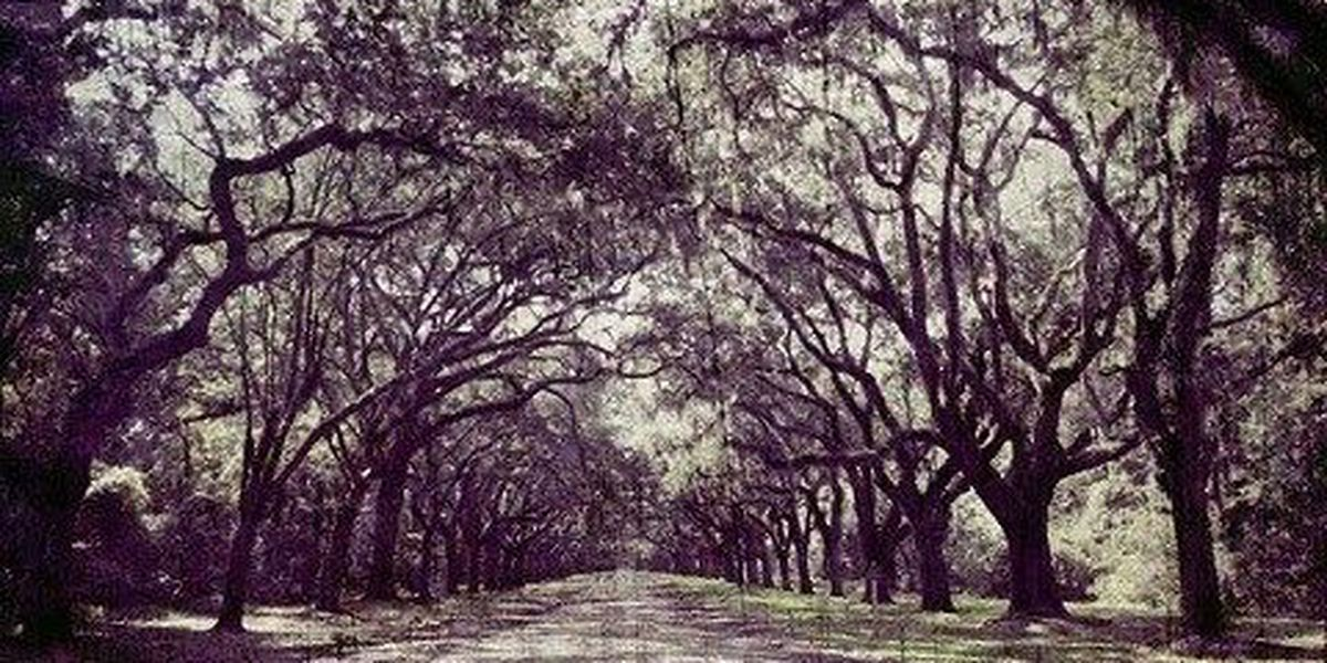 Wormsloe State Historic Site to hold haunted Colonial trail tour
