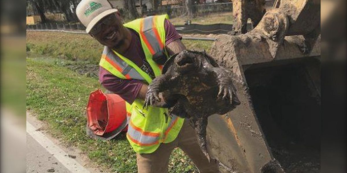 Wilmington Island residents work together to save turtles from construction site