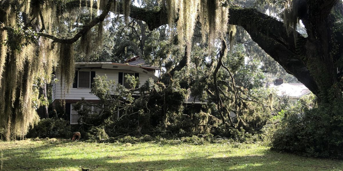No injuries reported after huge limb falls on Garden City home