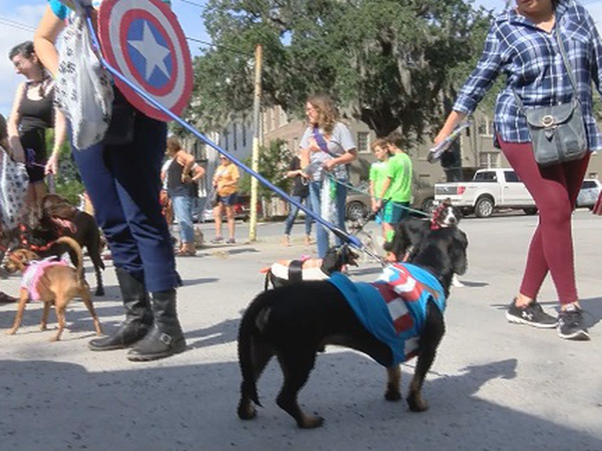 Annual Wag-O-Ween event held in downtown Savannah