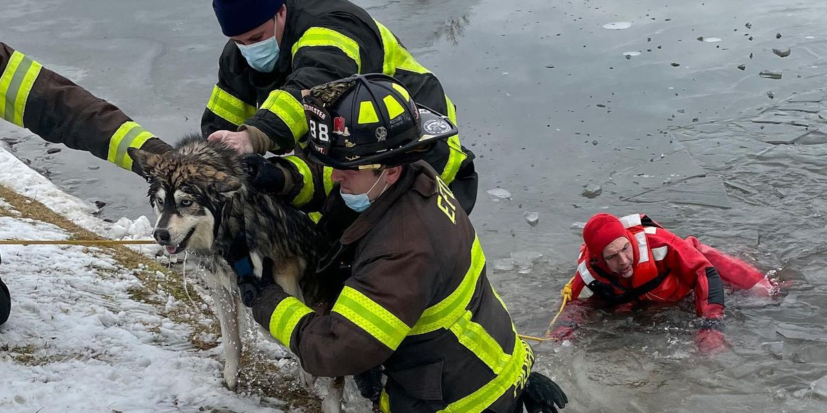WATCH: Firefighters rescue dog from frozen New York pond