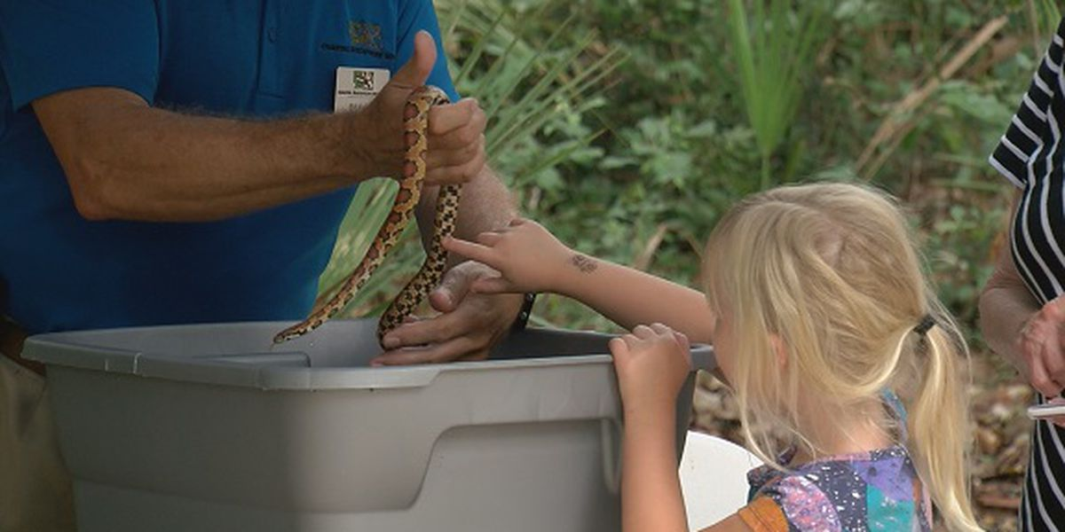 Community Champions: HHI's Lowcountry Critters Program