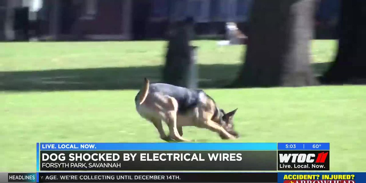Dog shocked by electrical wires in Forsyth Park