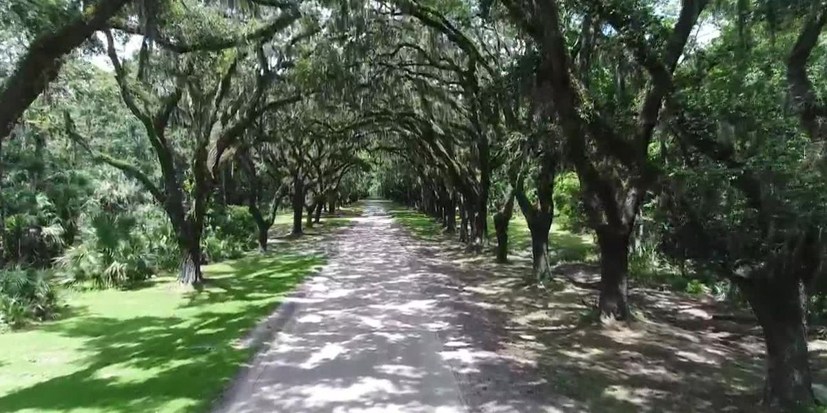 Exploring Our Parks: Wormsloe Historic Site